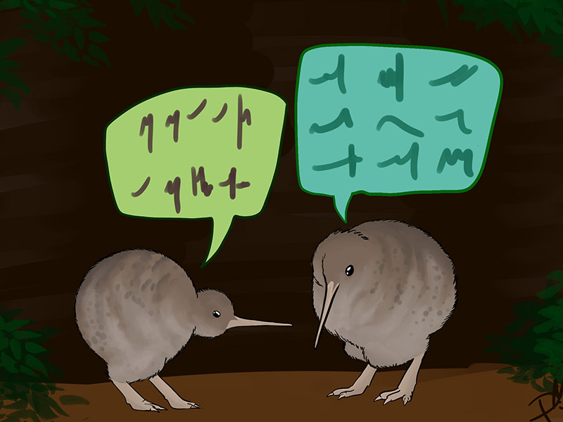 kiwis talking